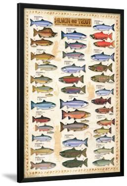 Salmon and Trout Educational Poster