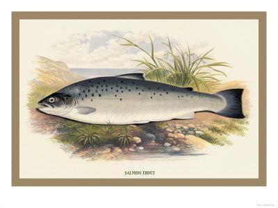 https://imgc.allpostersimages.com/img/posters/salmon-trout_u-L-P2AE820.jpg?artPerspective=n