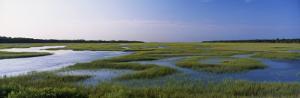Salt Marsh, Florida, USA