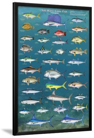 Salt Water Game Fish