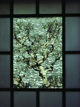 A Tree in a Courtyard Is Framed by a Window by Sam Abell
