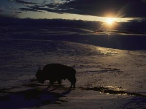 Bison in the Snow by Sam Abell