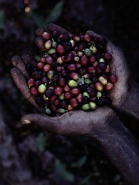 Coffee Beans by Sam Abell