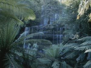 Lush Ferns Frame a Waterfall in the Park by Sam Abell