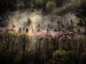 Misty View of a Forested Hillside by Sam Abell