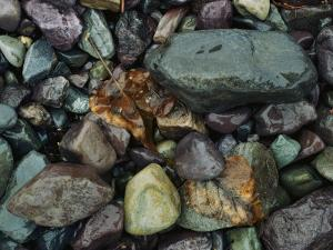 Rocks and Dead Leaves by Sam Abell