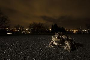 Common Toad (Bufo Bufo) and Common Frog (Rana Temporaria) in Amplexus in Urban Park by Sam Hobson