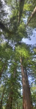 Upward view into a tree canopy. by Sam Kittner