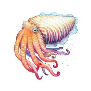 Cuttlefish by Sam Nagel