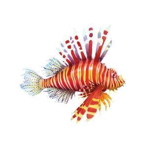 Firefish by Sam Nagel