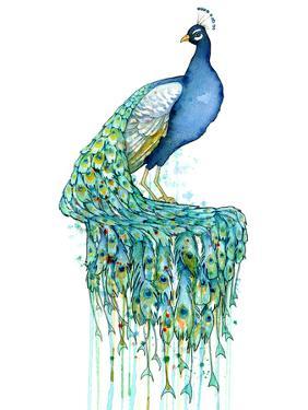 Peacock by Sam Nagel