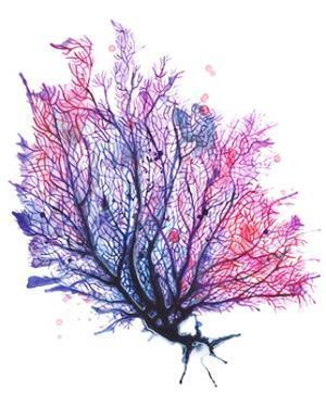 Sea Fan - Purple by Sam Nagel