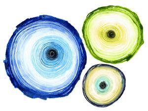 Tree Ring Trio by Sam Nagel