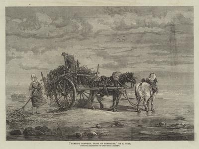 Carting Seaweed, Coast of Normandy, from the Exhibition of the Royal Academy