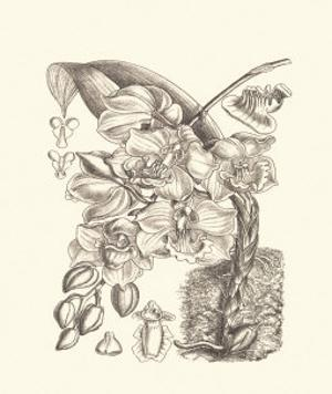 Black and White Curtis Orchid VIII by Samuel Curtis
