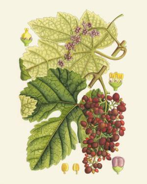 Crimson Berries III by Samuel Curtis