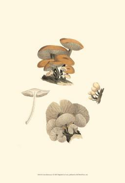 Curtis Mushrooms I by Samuel Curtis