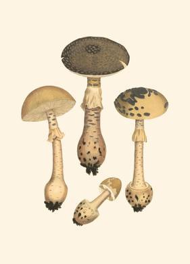 Curtis Mushrooms II by Samuel Curtis