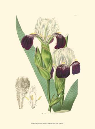 Elegant Iris IV by Samuel Curtis
