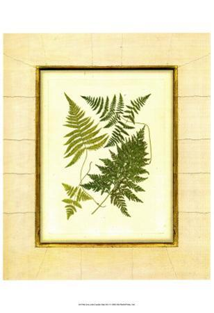 Fern with Crackle Mat I by Samuel Curtis