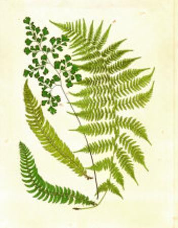 Fern with Crackle Mat II by Samuel Curtis