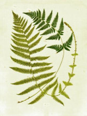 Fern with Crackle Mat III by Samuel Curtis