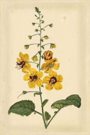 Floral Varieties I by Samuel Curtis