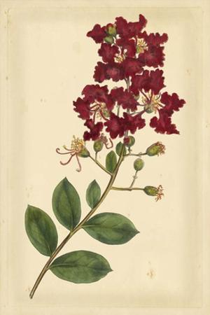 Floral Varieties II by Samuel Curtis