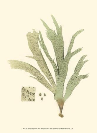 Marine Algae I by Samuel Curtis