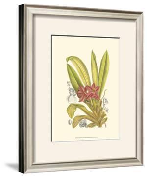 Orchid Plenty II by Samuel Curtis