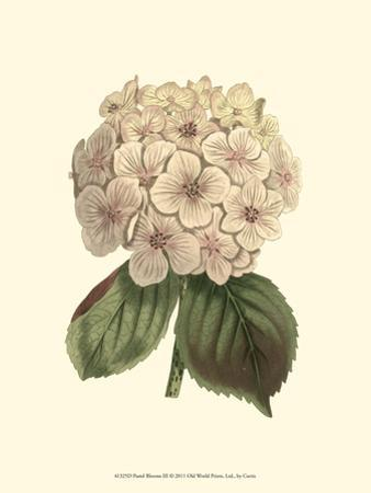 Pastel Blooms III by Samuel Curtis
