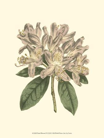 Pastel Blooms IV by Samuel Curtis