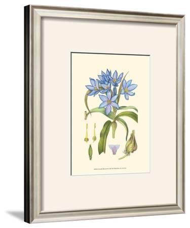 Periwinkle Blooms III by Samuel Curtis