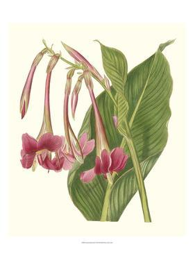 Tropical Indian Reed by Samuel Curtis