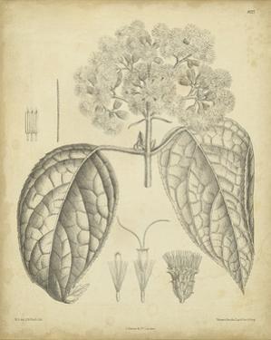 Vintage Curtis Botanical I by Samuel Curtis