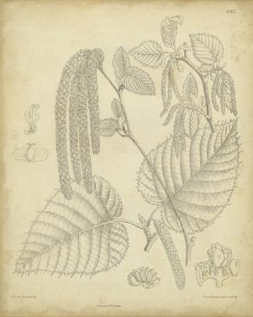 Vintage Curtis Botanical II by Samuel Curtis
