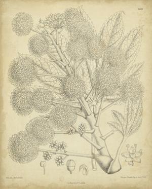 Vintage Curtis Botanical IV by Samuel Curtis