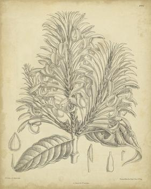Vintage Curtis Botanical V by Samuel Curtis