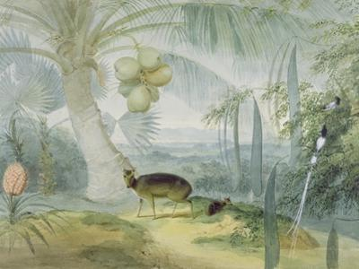 A Landscape in Ceylon, with Barking Deer and Fawn and a Pair of Paradise Fly-Catchers, C.1808-11 by Samuel Daniell
