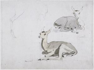 Studies of Young Pallah Deer Resting, C.1802 (W/C and Graphite on Paper) by Samuel Daniell