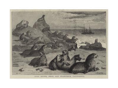 Seal Rocks, Near San Francisco, California