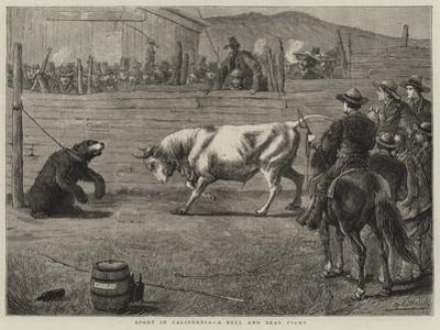 Sport in California, a Bull and Bear Fight
