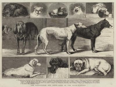 The Birmingham Dog Show, Some of the Prize-Winners