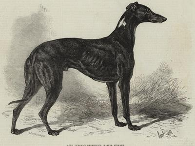 Lord Lurgan's Greyhound, Master M'Grath