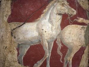 Italy, Naples, Naples National Archeological Museum, from the Villa of Arianna in Stabiae, Horses by Samuel Magal