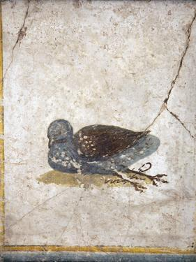Italy, Naples, Naples National Archeological Museum, Stabiae, Villa of Arianna (15), Birds by Samuel Magal