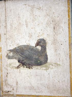 Italy, Naples, Naples National Archeological Museum, Stabiae, Villa of Arianna (15), Birds by Samuel Magal
