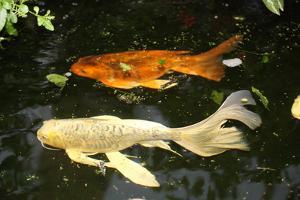 New York City, Bronx Zoo, Fish, Water by Samuel Magal