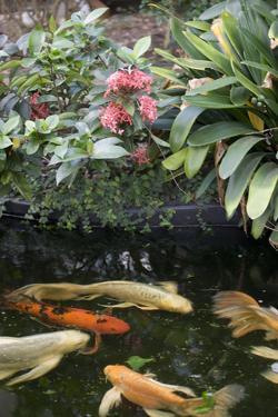 New York City, Bronx Zoo, Koi Fish Pond by Samuel Magal
