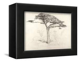 Old Cedar Tree in Botanic Garden, Chelsea, 1854 (Pencil on Paper) by Samuel Palmer